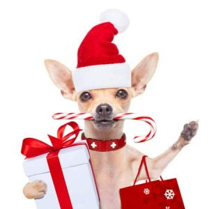 Christmas, spread the cost of Christmas 2016 with Catalogues, Credit Cards and Personal Loans